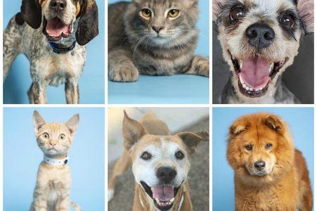 Richtige Pflege für Ihr Haustier